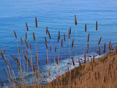 Blue Pacific (Gudrun's) Tags: pacific coast ocean azure blue california straws