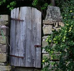 Quince tree in the garden of Bedheim castle (:Linda:) Tags: germany thuringia village bedheim gardengate brown castle quitte goldenapple quincetree quince door