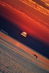 Abat-jour (lefotodiannae) Tags: alba ligure lefotodiannae mare sole gabbiano colori mattino