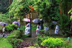 Rain..... display of Umbrellas (*Thalib*) Tags: people umbrella srilanka cannon kuruwita bopathella