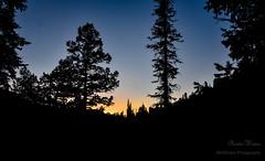 Nightfall (KWinters Photography) Tags: dark black orange colors dusk nigh silhouette sky d5500 nikondsl nikkor nikon forest sun colorado trees sunset