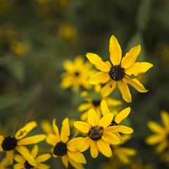 Madison, WI_08.2016 (BDomansky_1) Tags: 2016 cardinal goldfinch robin snowbird spring officewindow spring2016 urbandale iowa usa