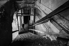 Stairway (Mustafa Selcuk) Tags: stairs fujifilm xpro2 istanbul turkey monochromatic monochrome blackandwhite bnw bw siyahbeyaz street streetphotography sb