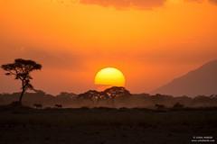 The giant sunset (Usha Harish) Tags: nature travel colours orange sun kenya africa silhouette zebras wildlife canon5dmarkiii scenic scenery landscape sunset