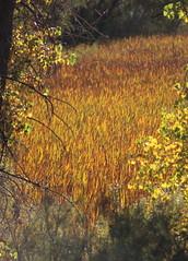Cherry Creek State Park Fall colors (patporzelt) Tags: fall colors cherry creek state park
