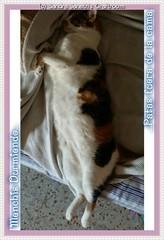 0000 - Redes Sociales (Sandra Janeth Saa Martnez) Tags: redessociales gatos mascotas menchis
