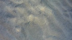 Lenguadn (AAcero) Tags: buceo diving almera cabodegata isub