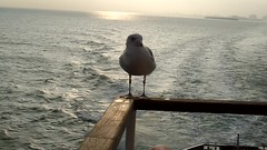 warum fliegen wenn man auch mit dem Schiff fahren kann (LL) Tags: leaving dunkerque dnkirchen fhre ferry rmelkanal channel sunrise early morning video