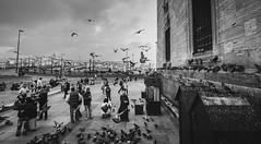 Of Birds and Men (Ash and Debris) Tags: square blackandwhile people birds city istanbul turkey urbanlife bw urban citylife pidgeon bird life wall feeding pidgeons feed monochrome ä°stanbul tr