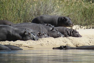 Namibia Dangerous Game Safari - Caprivi Strip 32