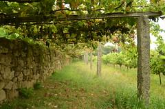 The fields of our childhood (Pedro Nuno Caetano) Tags: portugal braga mosteirodesmartinhodetibes monastery