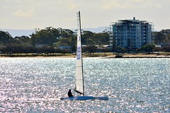 DSC_0393 (LoxPix2) Tags: loxpix queensland australia sailing catamaran trimaran nacra hobie arrow moth 505 maricat humpybongyachtclub humpybash aclass f18 mosquito laser bird spinnaker woodypoint