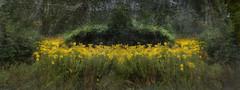 Mother Of Flowers (Ross G. Williams) Tags: flowers landscape night motherhood fingerlakestrail