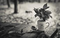 Coffee tree (davide978) Tags: mg6610 davide978 davide colli caff coffee tazza cup 2016 5d canon bokeh