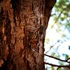 The cicada without the ant... 😉 La cigale sans la fourmis... 🌞 #Greece #Grece #Salamina #Cigale #Cicada #Beach #Plage #Mer #Sea #Arbre #Tree #GalaxyS6 #StudioOCOMA (studioocoma) Tags: plage mer studioocoma tree cigale salamina beach greece galaxys6 arbre cicada grece sea