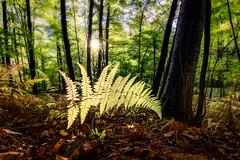 After the Rain (crmanski) Tags: crescentlake landscape southingtonct fern forest