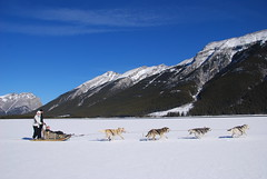 Dog Sledding (Alberta Parks) Tags: outdooractivities people dogs sledding dogsledding winter activity recreation parks mountains cold fun