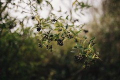 Autumn bokeh (explore) (desomnis) Tags: bokeh nature soft autumn leaves sigma35mm 35mm desomnis canon6d