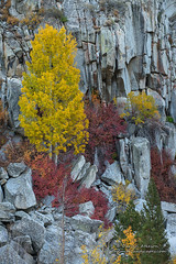 A canvas of Granite - Bishop Creek Canyon (Darvin Atkeson) Tags: autumn fall color eastern sierra nevada mountains desert aspen gold golden california grove stand trees trunk bark white mono county darv darvin lynneal atkeson yosemitelandscapescom