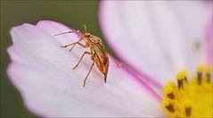 Macro Monday: Edge (Sue90ca Glorious Autumn) Tags: canon 6d macromonday edge bug flower