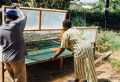 UG1605_225 (Heifer International) Tags: uganda ug