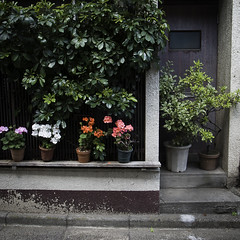 Ledge with Potted Plants, and Potted Plants Door, Monzennakacho (jacob schere [in the 03 strategically planning]) Tags: door urban plant up japan digital garden square tokyo gardening jacob 4 line communication pot ledge gr lucid iv ricoh potted lineup m2c schere  dgr  jacobschere lucidcommunication monzennakocho
