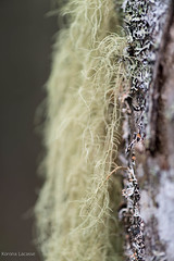 Tree Moss03 (Korona4Reel) Tags: trees lake canada tree green nature forest outside outdoors moss woods nikon forestry glen dirt bark treebark damp d800 moist nikond800 lakegeorgens koronalacasse koronalacassephotography korona4reel