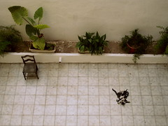 mommy & kittens (#fay#) Tags: plants cats cat garden outside chair flat feeding sweet balcony mother kittens athens kitties