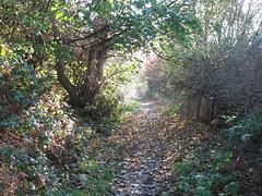 Autumn Sun (robdphotographer) Tags: uk autumn england orange sun nature leaves canon landscape leeds photoblog valley leedswestyorkshire meanwoodvalley follow4follow robdphotographer