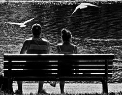 All you need is... love (Jean S..) Tags: summer blackandwhite bw woman male water birds bench couple day