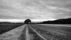 (salparadise666) Tags: nils volkmer black white monochrome landscape niedersachsen silver efex germany rural calenberger land hannover region