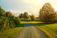 Golden days. (Hazellosaur) Tags: landscape nature natural sunset sunlight field path golden hour