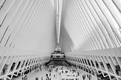 Wide and Beautiful (Lojones13) Tags: oculus wide beautiful worldtradecenter transportationhub openspace newyork nikond7000 architecture building blackandwhite inside