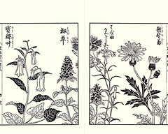 Japanese fairy bells, heal-all, fringed pink and Chinese wedelia (Japanese Flower and Bird Art) Tags: flower fairy bells disporum sessile colchicaceae healall prunella vulgaris lamiaceae fringed pink dianthus superbus caryophyllaceae chinese wedelia chinensis asteraceae yasukuni tachibana kano woodblock picture book japan japanese art readercollection