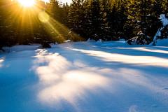sunlight (oleksandr.mazur) Tags: day dusk evening forest frost inspire landscape light nature outdoor rays relax scene shadows snow snowy sun sunbeam sunlight sunset sunshine winter woodland