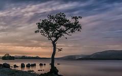 Milarrochy Bay (murphy197) Tags: tokina1116mm tree lochlomond longexposure milarrochybay scotland nikond7100 anneflaherty