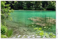 Alatsee Fssen (Mr.Vamp) Tags: alatsee allgu erholung relaxing fun freude erwartung ruhe entspannung see mrvamp vamp recreation joy expectation rest relaxation lake vampalatsee