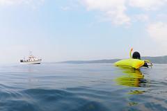 Plymouth-201605-28-CalmSea-PickUp (Tony J Gilbert) Tags: plymouth marine macro underwater diving nikond300 handdeeps jameseaganlayne hilseapointrocks scylla ceeking wwwdivingplymouthcom