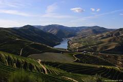 Alto Douro Vinhateiro - Pinho. (franois26) Tags: pinho altodourovinhateiro real r rgua vilareal oporto porto portugal