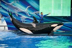 DSC_0216 (photosbyjenna) Tags: seaworld sea world orca whale photography dolphin animal orlando texas san antonio trainers shamu penguins dolphins seaworldparks