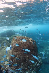 Raoul Island snorkelling (cathm2) Tags: newzealand kermadecs raoul island snorkelling underwater nature fish blue travel