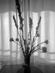 Nardos y claveles (Micheo) Tags: iphone flores flowers bnbw ramo bunch vase florero cortina curtain