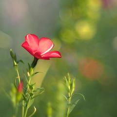 September bokeh (rotraud_71) Tags: september latesummer bokeh flowers fantasticflower