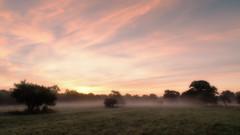 2016 Eades - Misty Morning (Birm) Tags: eadesmeadow worcestershirewildlifetrust meadow autumn morning dawn sunrise field outdoor landsscape sky trees grass mist wwt sony