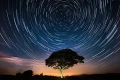 Tree of Light (Ben Lockett) Tags: 1740l 5d canon circle field lightpollution tree sky nightsky astrophotography nightscape startrails star