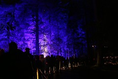 2016 - 14.10.16 Enchanted Forest - Pitlochry (231) (marie137) Tags: enchanted forest pitlochry mobrie137 scotland lights music people water reflection trees shows food fire drink pit patter shapes art abstract night sky tour family walk path bells smoke disco balls unusual whisperer bridge wood colour fun sculpture day amazing spectacular must see landscape faskally shimmer town