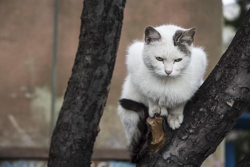 Somber kitty