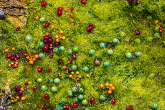 Colors (Fredrik Lindedal) Tags: colors red green orange grass stone nikon happy colorful berry varieties onewithnature fredriklindedalse gotland ilovenature