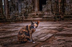 Guardian of the temple (Stan Smucker) Tags: cat ruins travel temple cambodia angkorwatarcheologicalpark bayontemple bayon angkorwat streetphotography