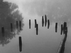 PA060047 (Paul Henegan) Tags: hackensackriver cloudysky foggymorning mist monochrome reflections woodenpilings
